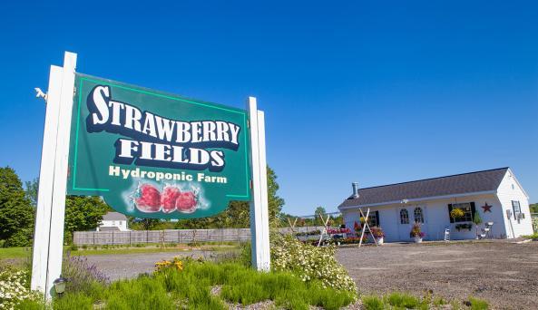 Strawberry Fields Hydroponic Farm