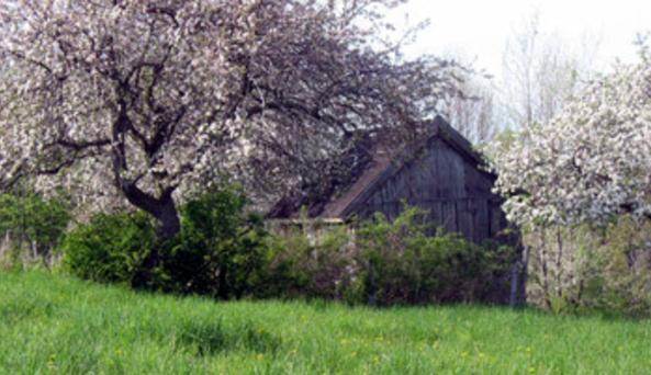 Sunny Cove Farm Organic Apple Orchids