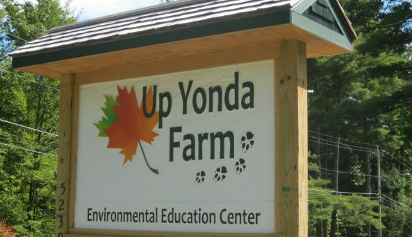 Up Yonda Maple