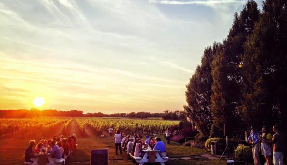 Vineyard Dinner sunset