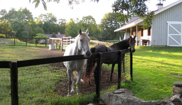 Whistlewood Farm - Horses
