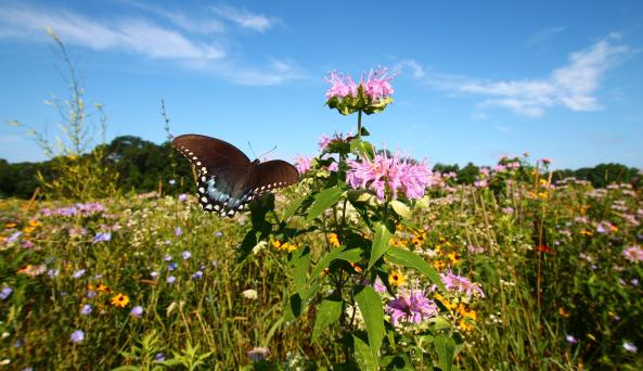 Wildflower Field at Bedell Cellars