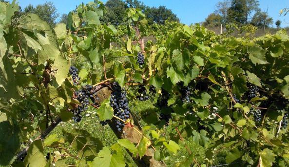 Altamont Winery