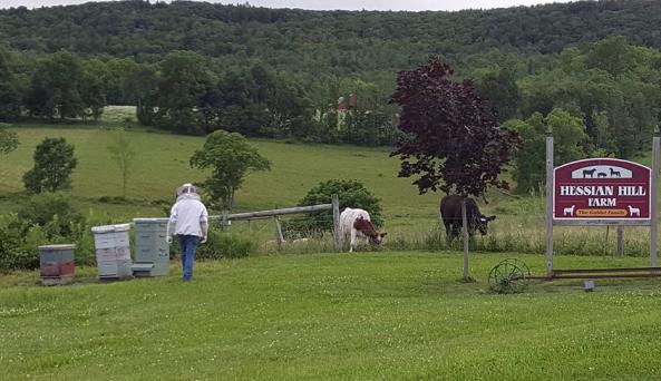 Hessian Hill Farm - Photo Courtesy of Hessian Hill Farm