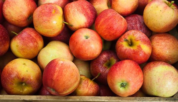 Samascott Orchards Gala