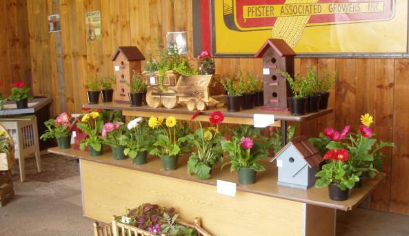 hardys-farm-market-victor-interior