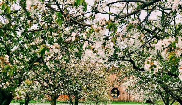 In the springtime