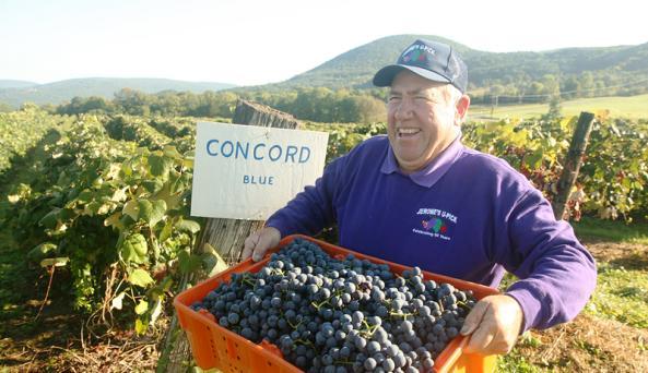 jeromes-upick-naples-rman-holding-grapes