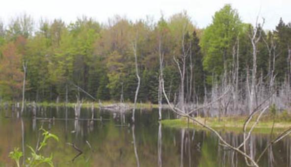 Keeney Swamp