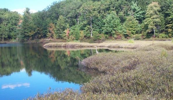 Moss Lake Preserve