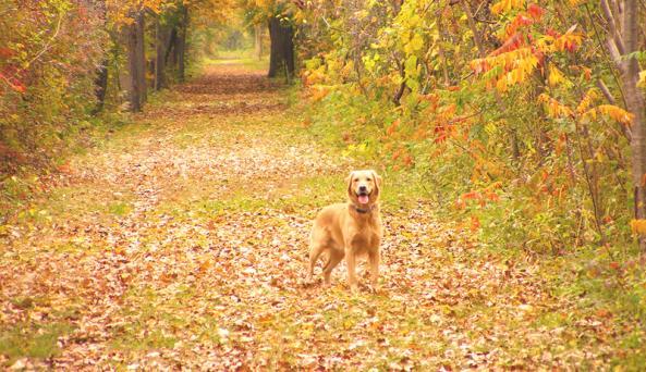 ontario-pathways-fall-dog