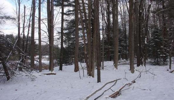 Plumbottom Forest