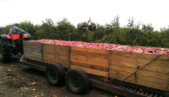 red-jacket-orchards-geneva-orchards
