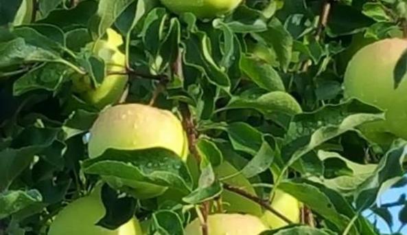 Reisinger's Apple Country