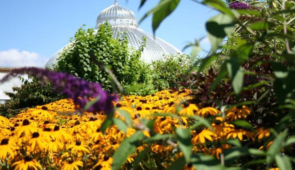 shrub garden Photo Courtesy of The Buffalo and Erie County Botanical Gardens