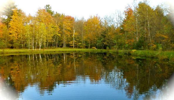 Swan Lake Camp