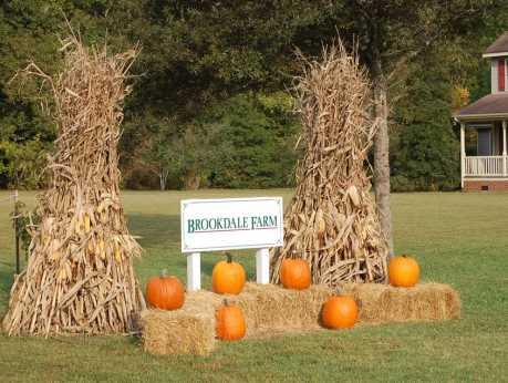 Brookdale Farm - Fall