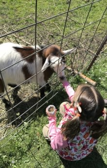 Feeding Goats at Northern Lights Christmas Tree Farm by Taj Morgan
