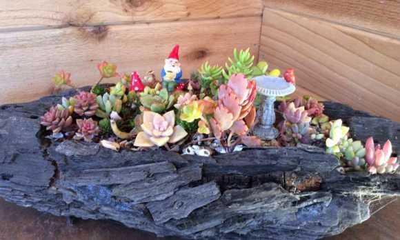 Succulent Fairy Garden