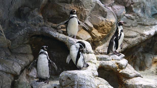 Aquarium-of-Niagara