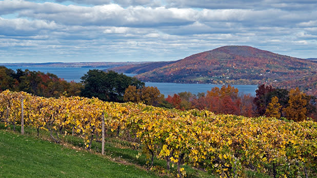 Aerial view of Finger Lakes wine country