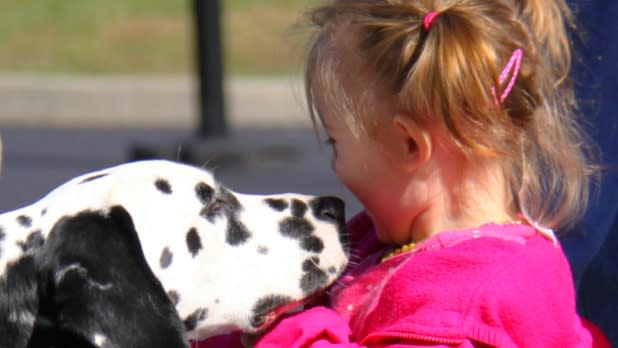 Child plays with Dalmatian at Dalmatian Day festival