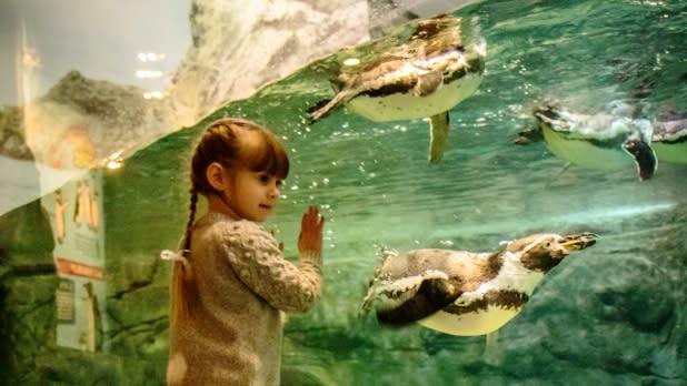 Little girl watching penguins at Aquarium Niagara