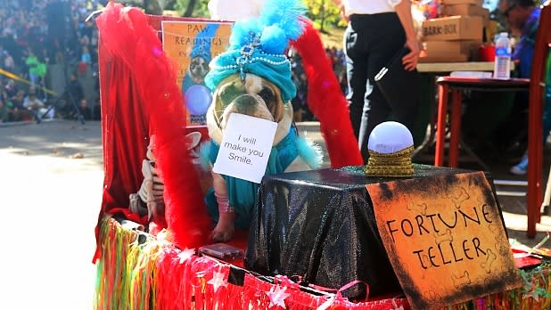 Annual Great PUPkin Dog Costume Contest