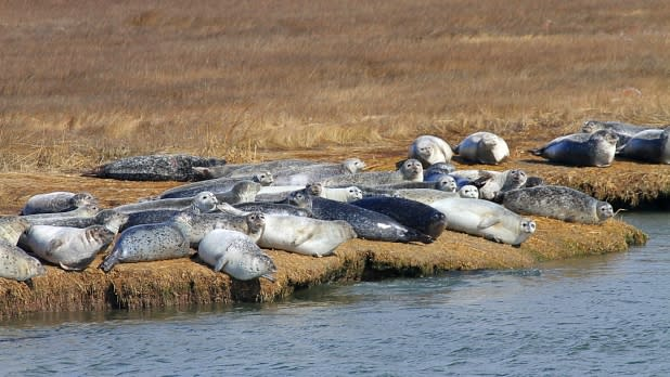 Seals on a harbor cruise