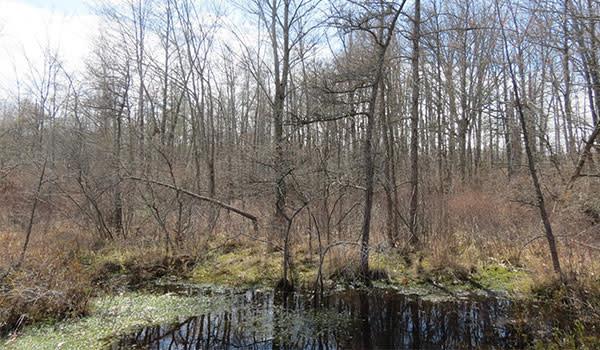 Michael Nichols Pinhook Bog covered with moss