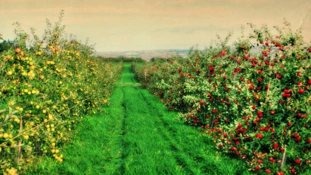 Beak & Skiff Apple Orchards; Photograph: Courtesy of Beak & Skiff