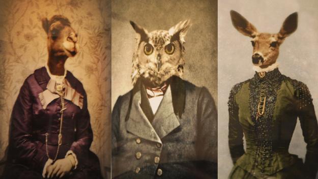 Bodega Wine Dive | Animal Prints