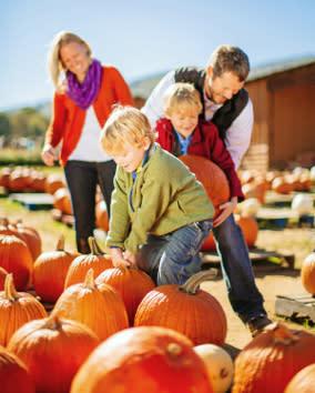 Fall Pumpkins Virginia