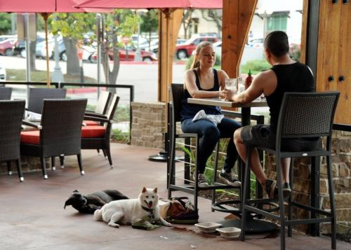 Pet Friendly Lazy Dog Cafe