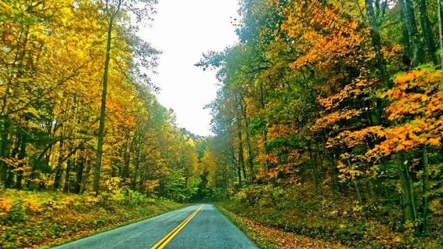 Fall Color Scenic Drive - Fall Photo