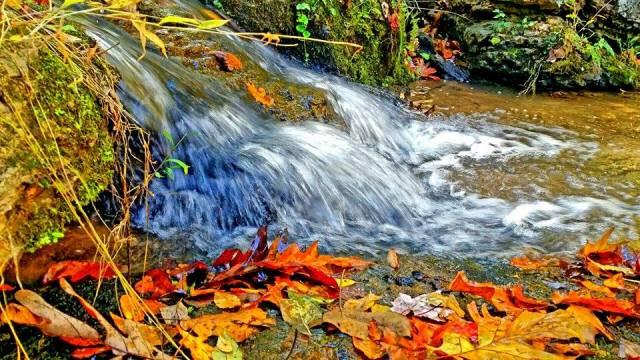 Fall Water Stream - Fall Photo