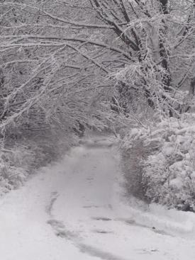 vicky-money-lane-snow-winter-scenic