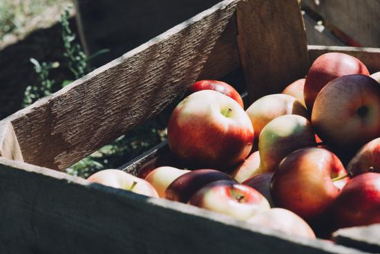 Apple Orchard in Eau Claire, Wisconsin