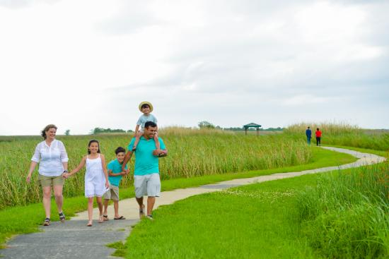 Take the family out and explore the Wetland Walkway.