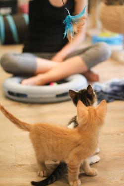Cat Yoga Kittens