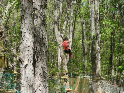 Swinging at Treetop Quest