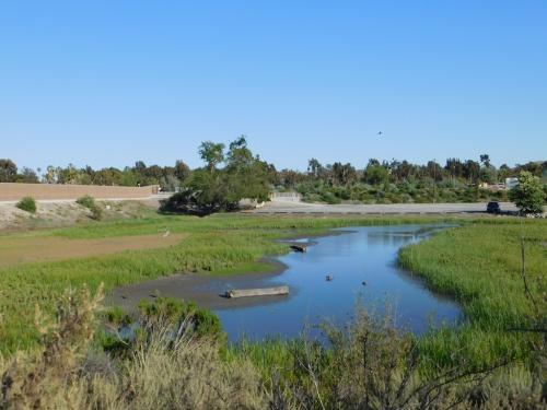 San Joaquin Marsh & Wildlife Sanctuary in Irvine, CA