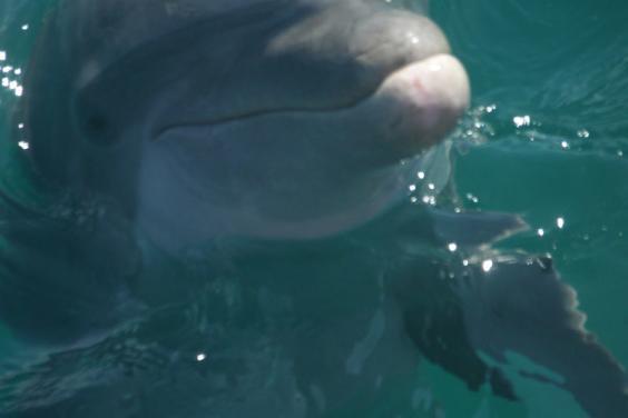 Bring along a waterproof camera great Dolphin photos!!!!