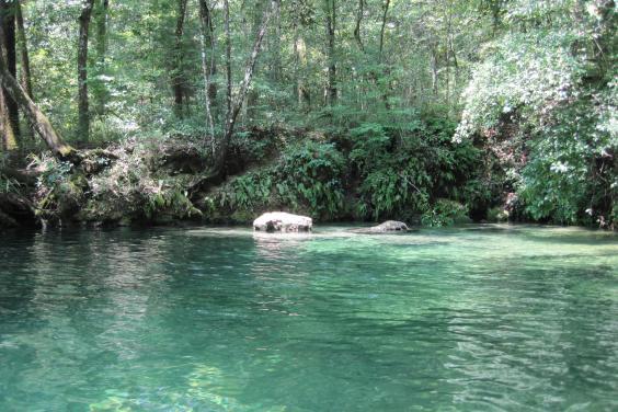 Econfina-and-Holmes-Creek-1381.jpg
