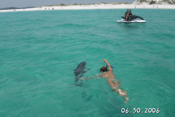 Flippers Dolphin Tours