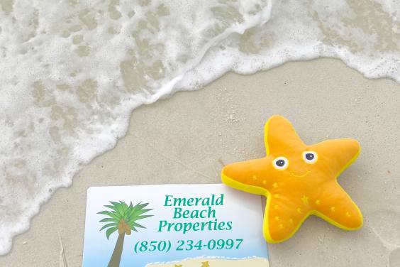 Sandy Starfish At the Beach