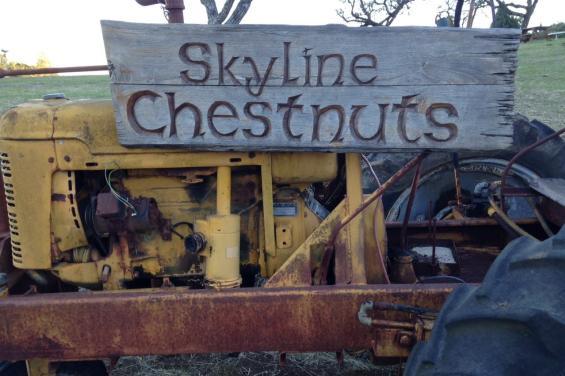 Skyline Chestnuts 2