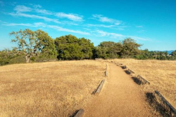 Edgewood_Park_-_Live_Oak_Trail_001.jpg
