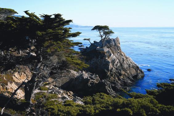 Lone Cypress - Carmel