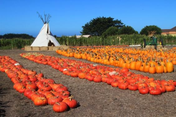 pumpkins_by_Edna_Takeda_Geller.jpg